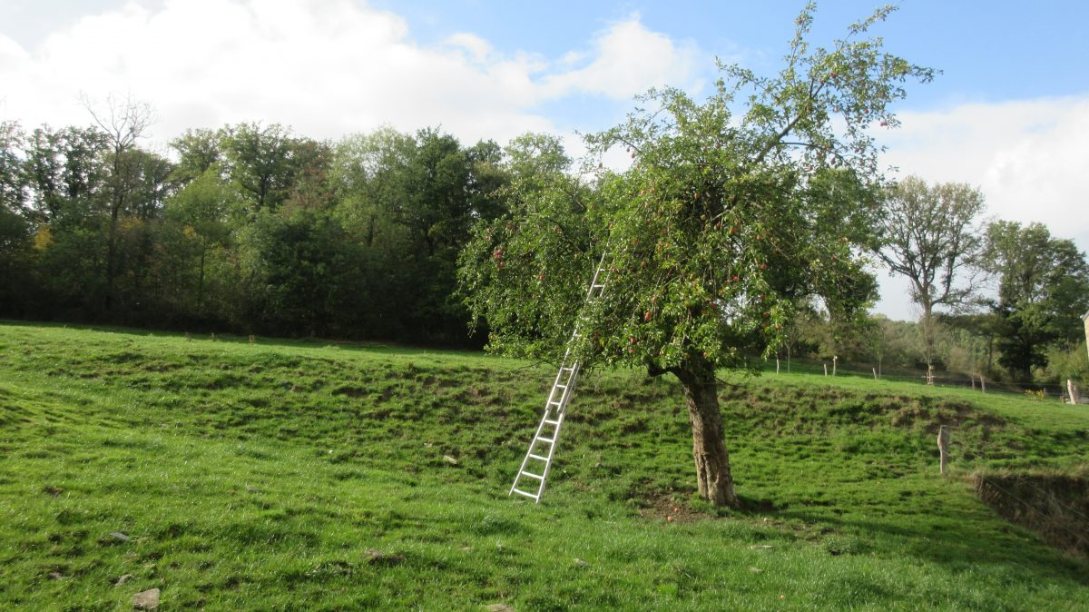 Tag 7 – zu Fuß durch die Ardennen:  von Montfort nach Bomal (33 km)