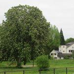Blick auf Nettersheim