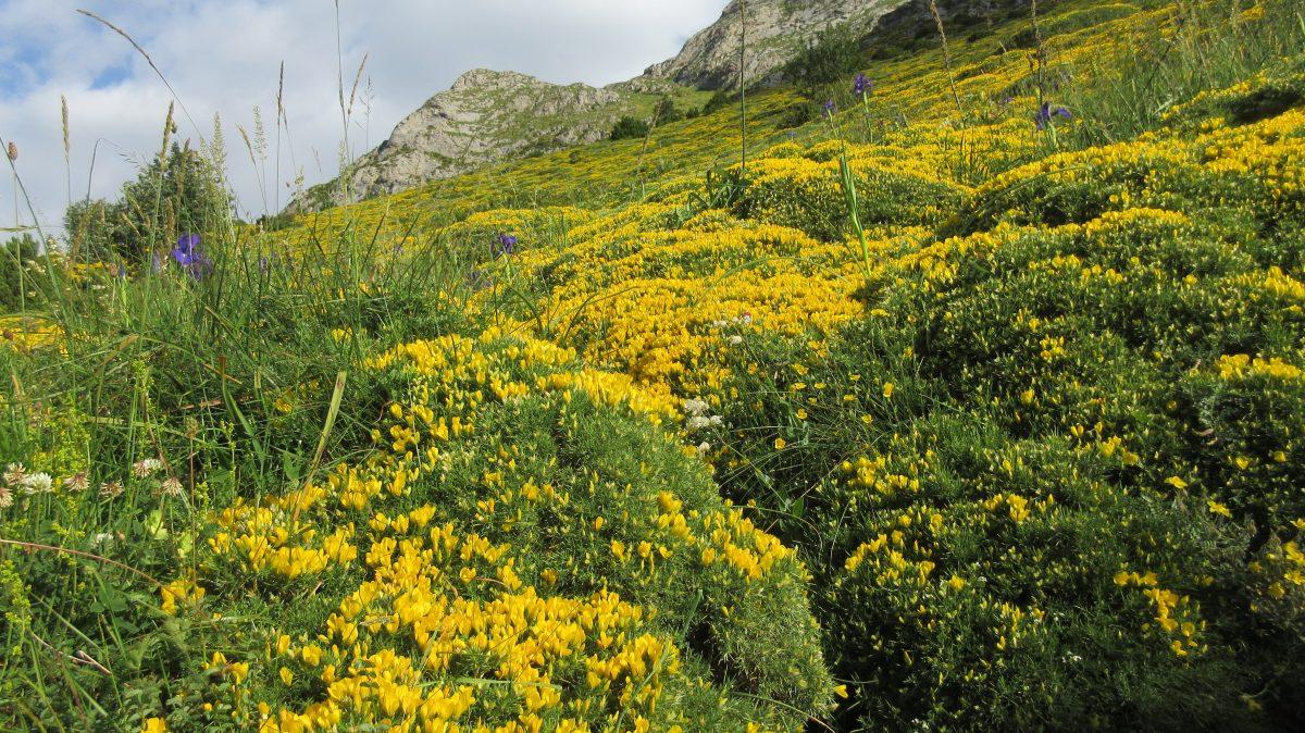Tag 10 – Rund um den Cirque de Gavarnie im Nationalpark der Pyrenäen: Rifugio Bujaruelo – Cabane de Lourdes